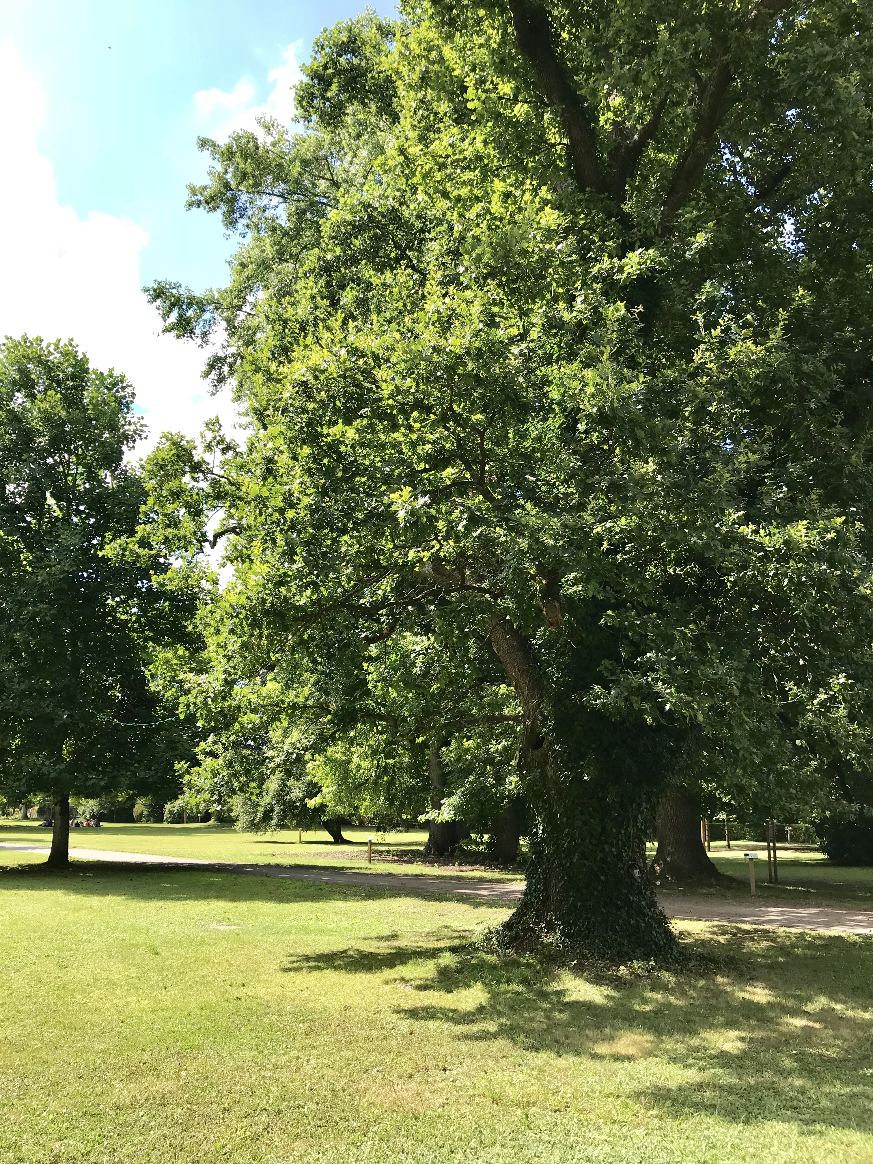 château de Laàs parc jardin
