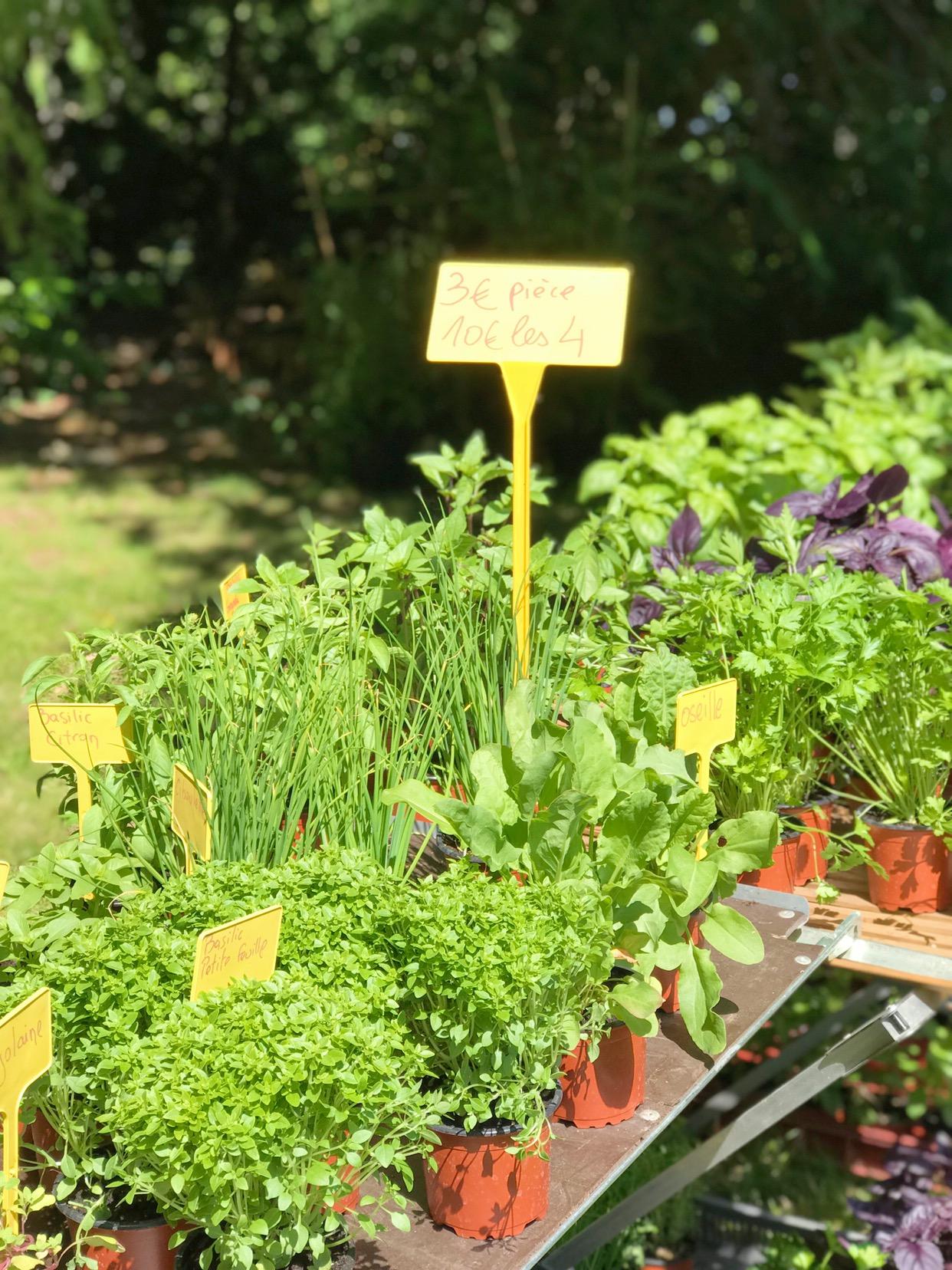 rendez-vous au jardin à la villa Arnaga