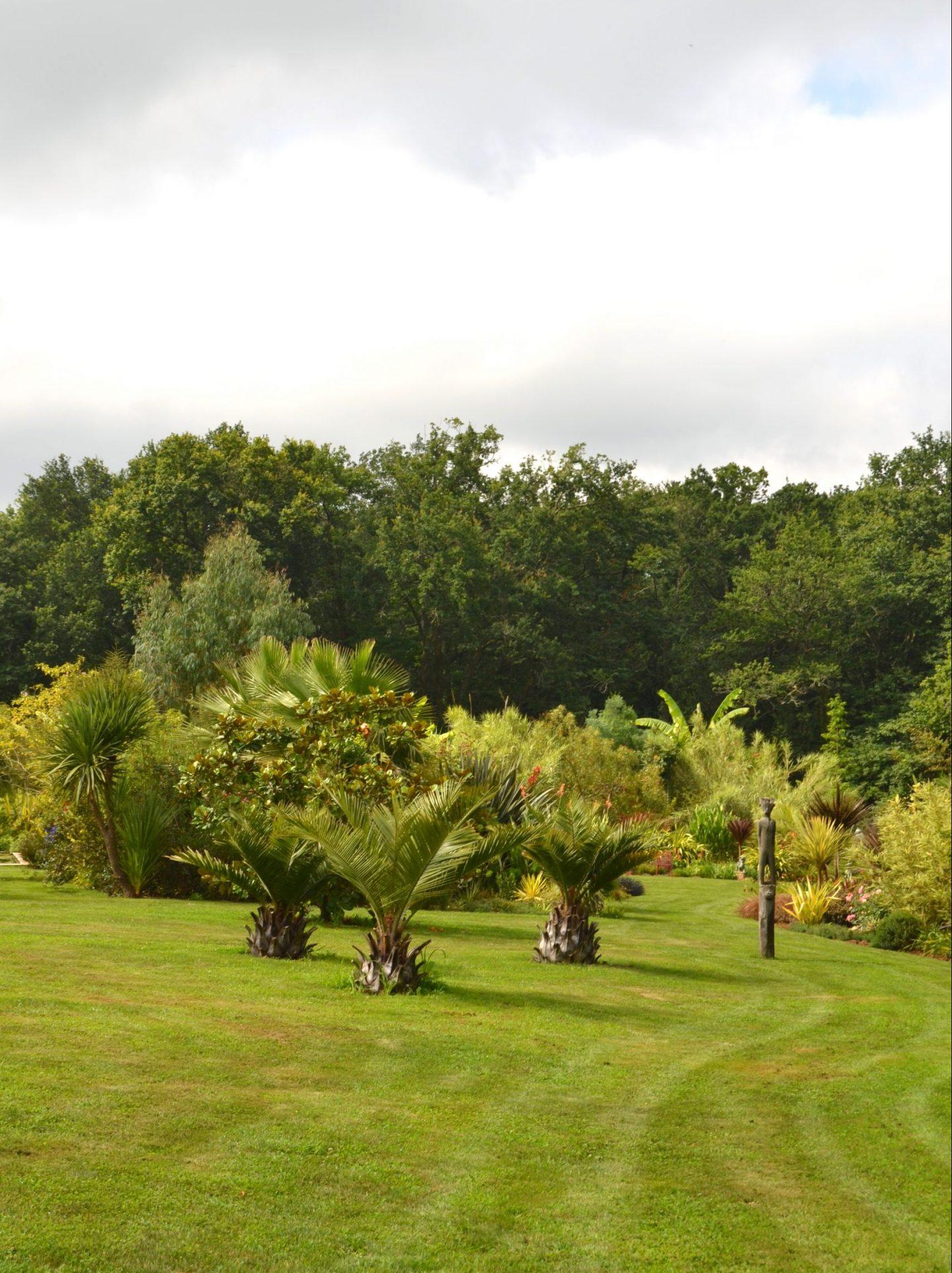 palmier dans le jardin des barthes